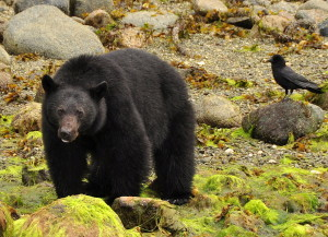 Wildlife Tour Ucluelet