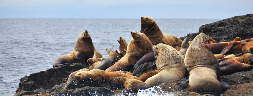 Wildlife Cruise Ucluelet