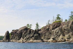 wildlife tours Vancouver Island