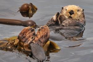 wildlife cruises Vancouver Island