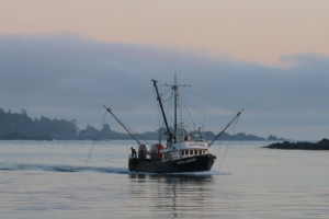 Whale watching cruises Vancouver Island
