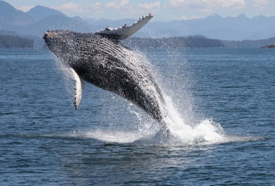 Wildlife Tours Ucluelet