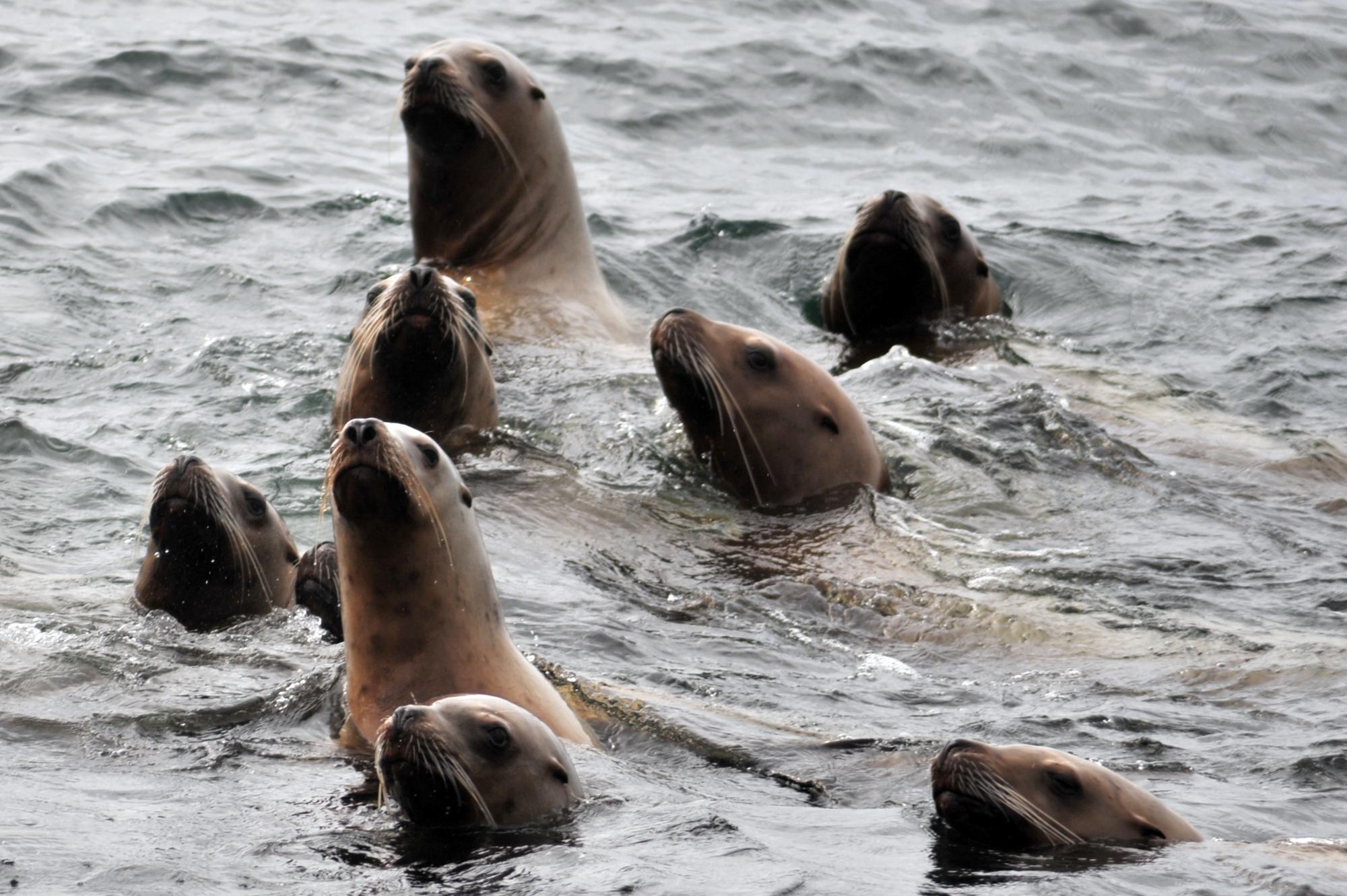 wildife tours Vancouver Island