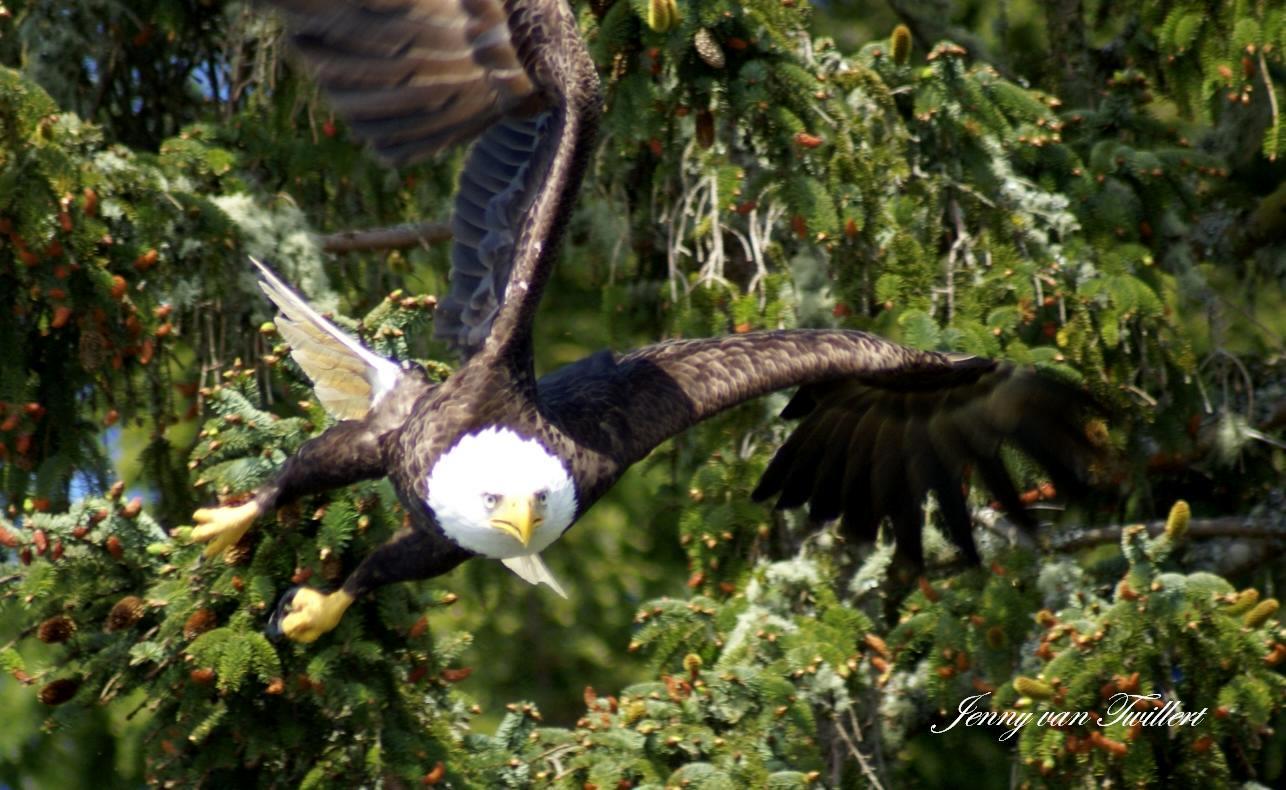 wildlife cruise Vancouver Island