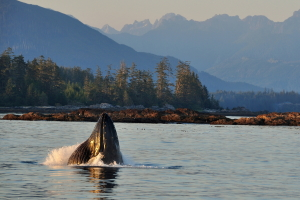 Whale watching tours Vancouver Island