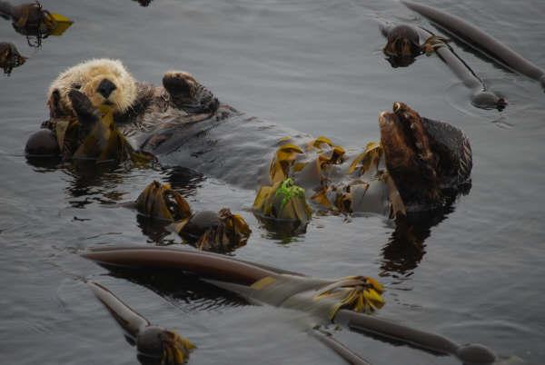 wildife cruise Vancouver Island
