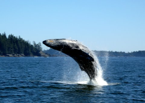 Wildlife Cruise Tofino