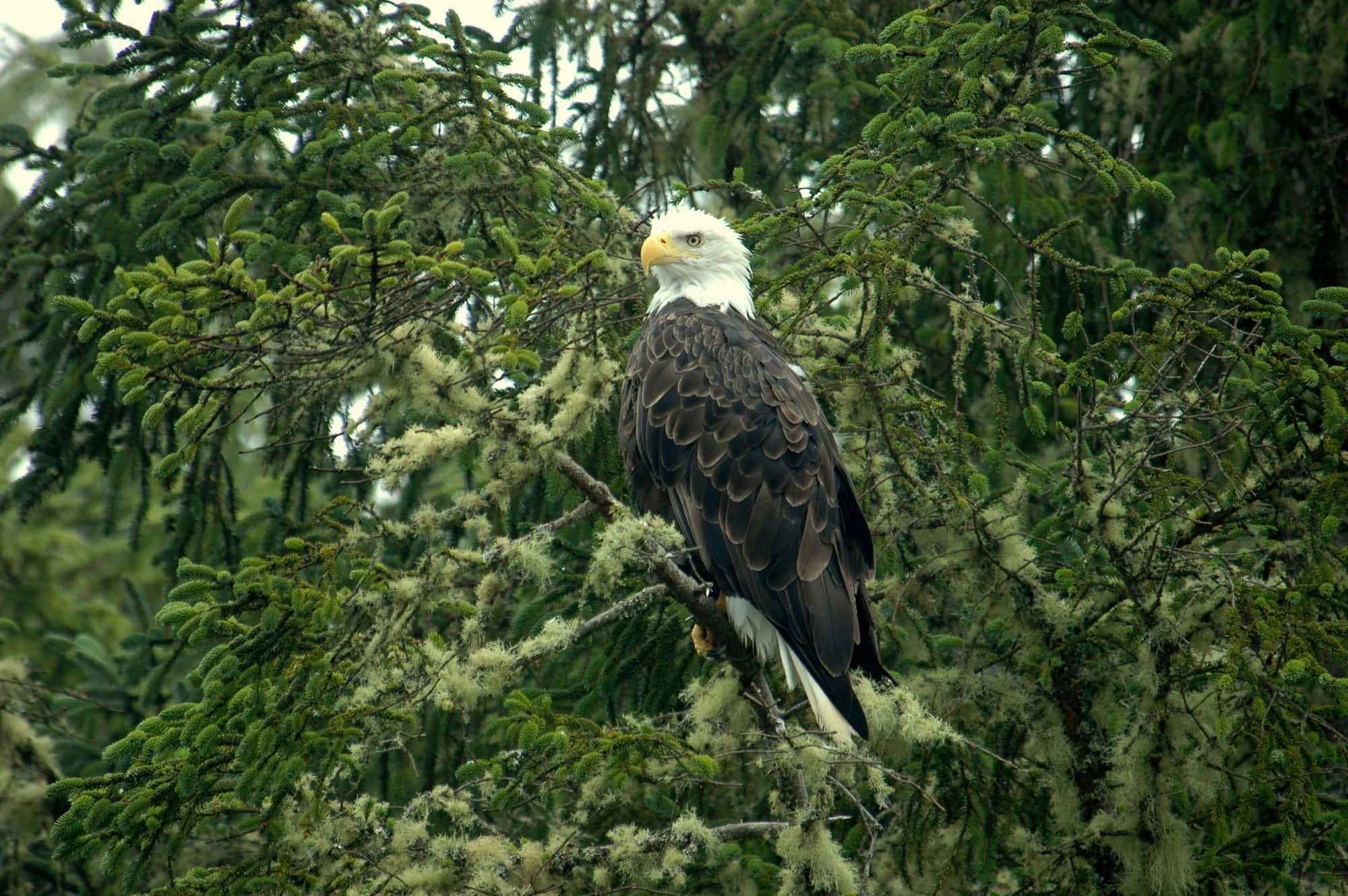 wildlife tour Tofino