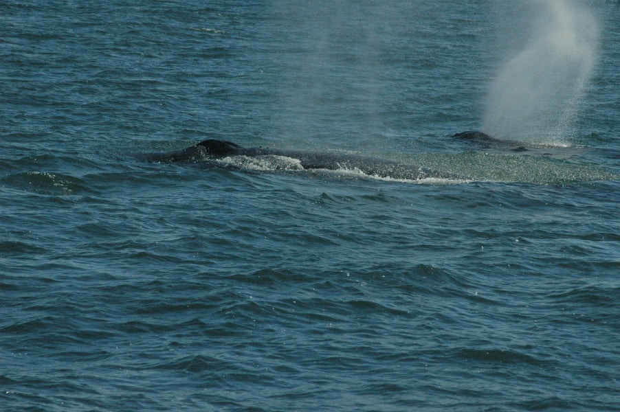 Whale Watching Cruise Vancouver Island