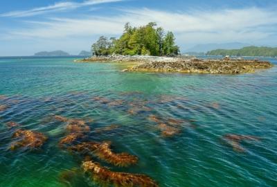 Broken Group islands scenery - rocks & island in background, clear jade green ocean and kelp plants beneath surface in foreground