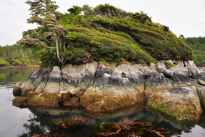 Vancouver Island nature boat tours