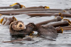 Wildlife tour Vancouver Island